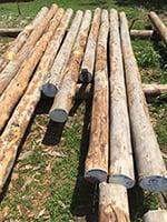 Greenheart Lumber - Greenheart Wood