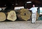Ipe Wood Logs