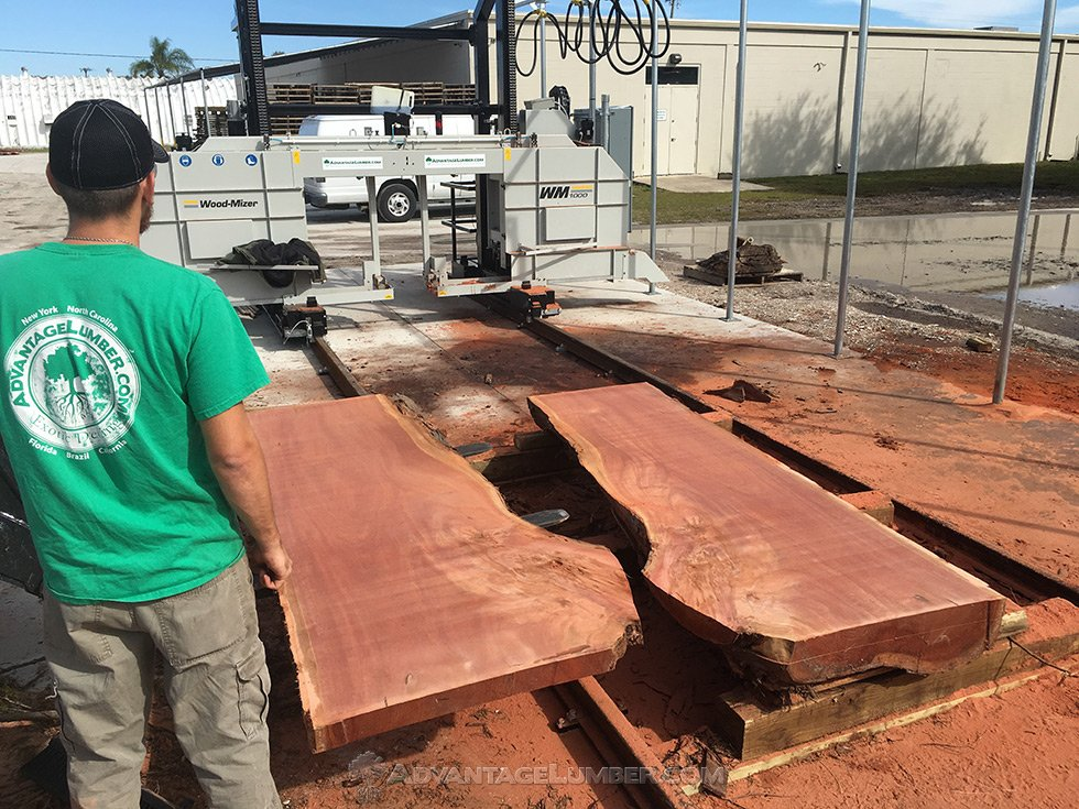eucalyptus wood slab